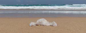 playas limpias fuerteventura