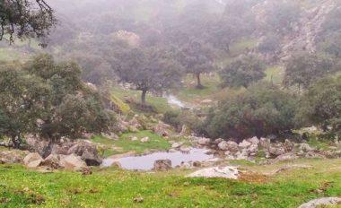 lince iberico-Parque natural Sierra de Andujar-jaen-naturaleza-paisaje