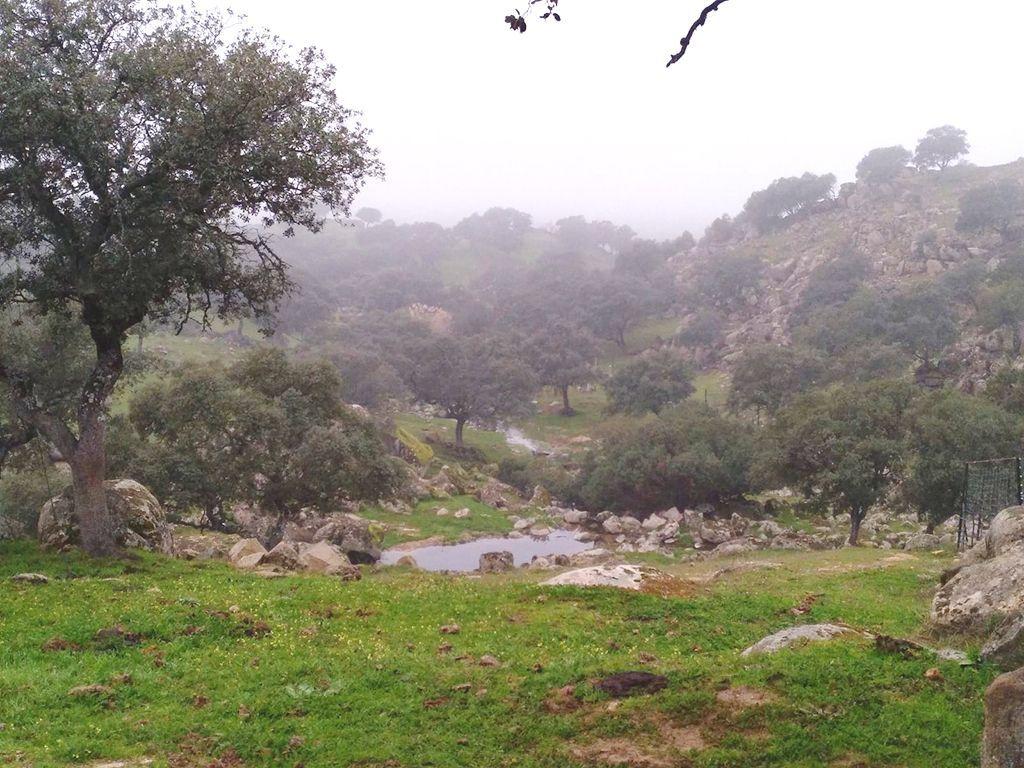 lince iberico-Parque natural Sierra de Andujar-jaen-naturaleza-paisaje-dehesa