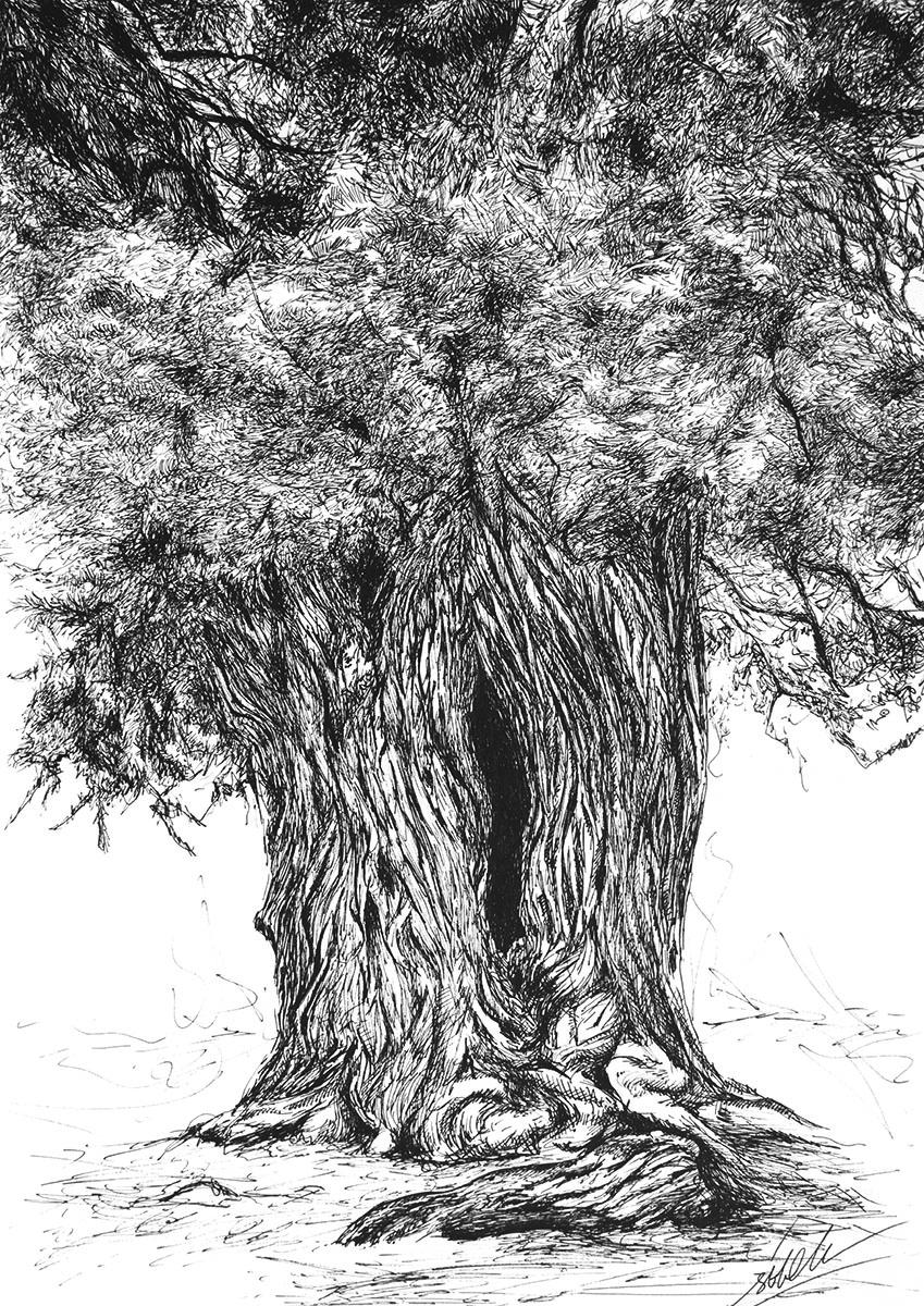 arbol grieta-naturaleza-sirem wild