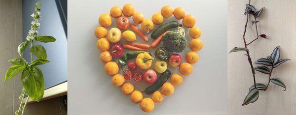 frutas-verduras-vegetales-sirem wild-plantas-Naturaleza moderadora estres