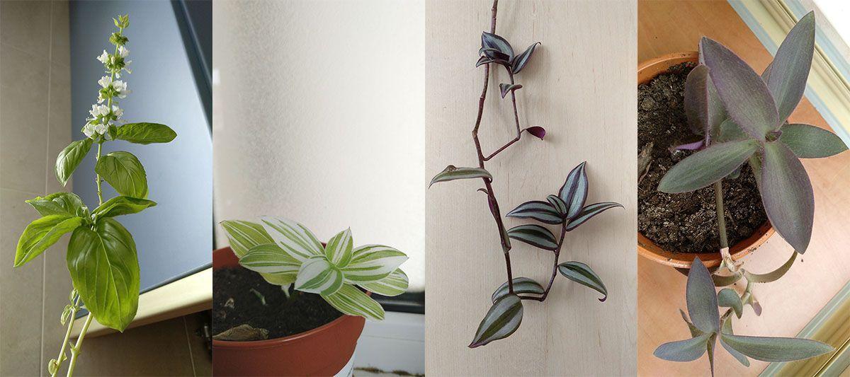 plantas-sirem wild-naturaleza