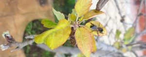 polinizadores-abejas primavera-sirem wild-plantas-Naturaleza-hojas.jardin