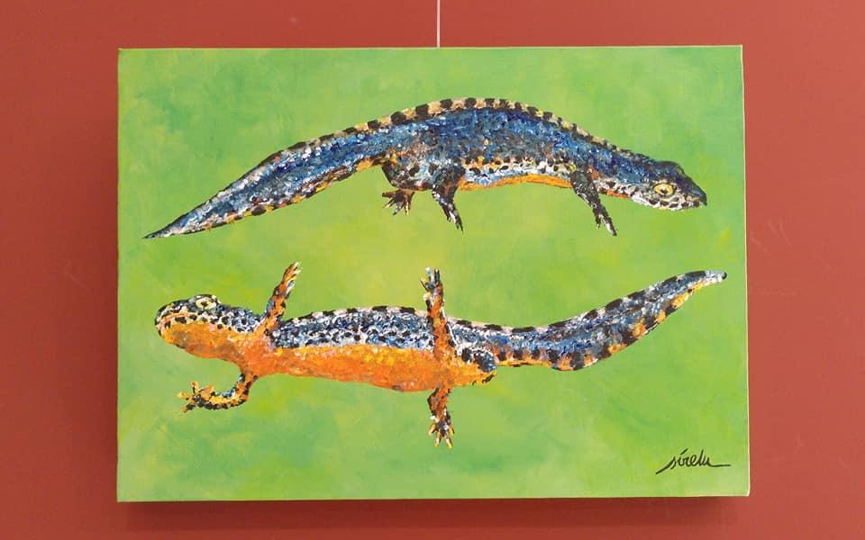 triton alpino-Ichthyosaura alpestris-sirem wild-pintura