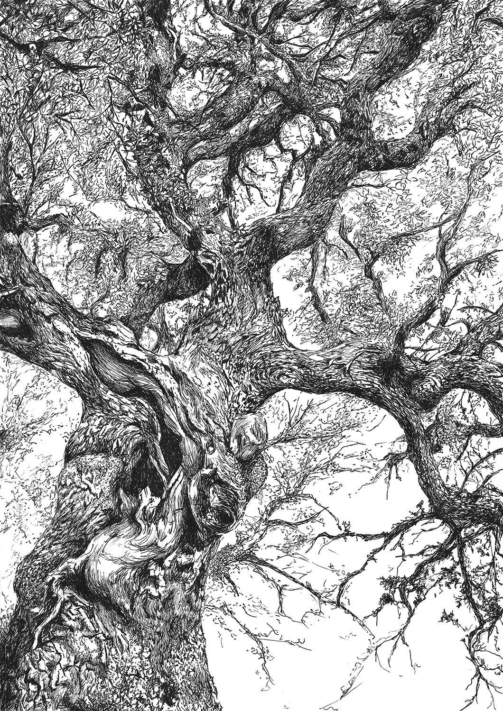 dibujo arbol encina conceja ilustracion boligrafo-sirem wild