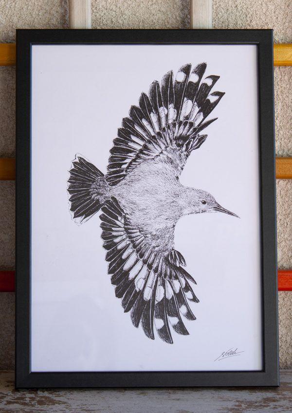 dibujo treparriscos ilustracion boligrafo-sirem wild