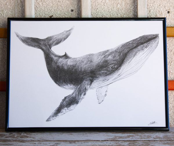 dibujo Ballena ilustracion boligrafo-sirem wild