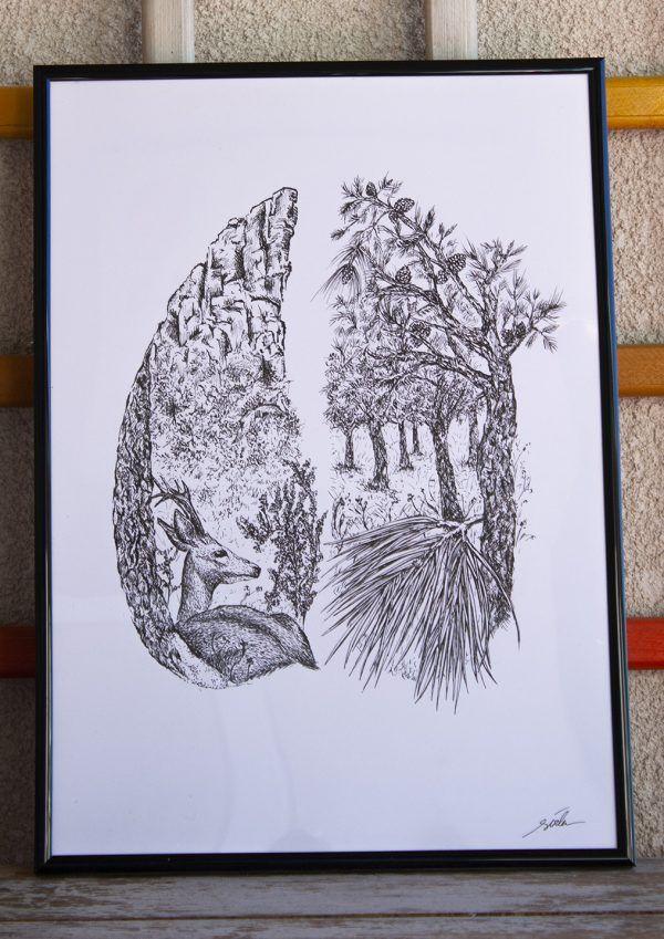 dibujo Corzo ilustracion boligrafo-sirem wild