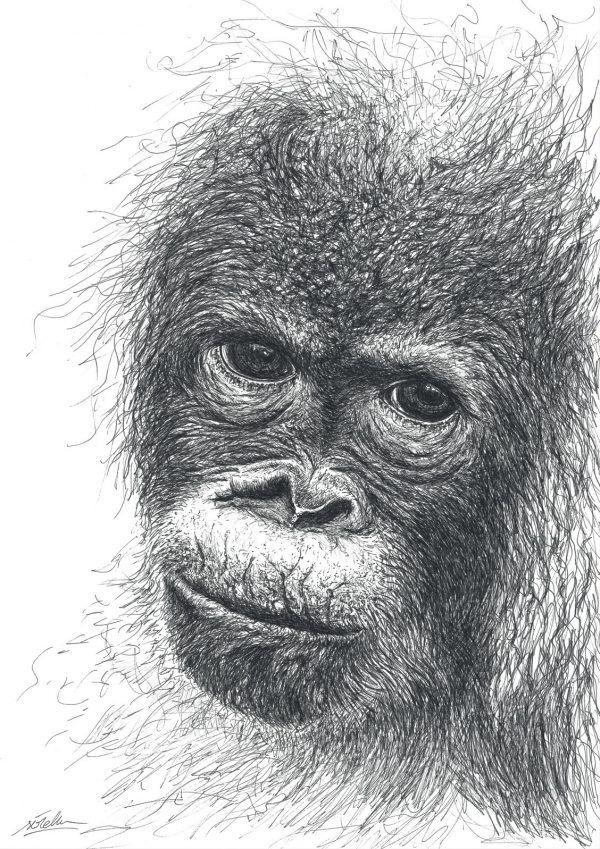 dibujo Orangután Bebé boligrafo-sirem wild