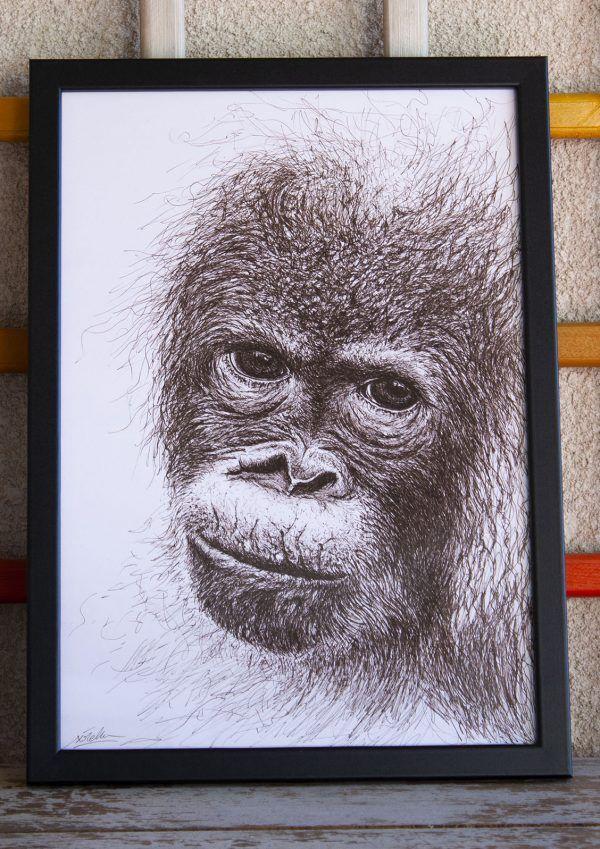 dibujo Orangután Bebé ilustracion boligrafo-sirem wild