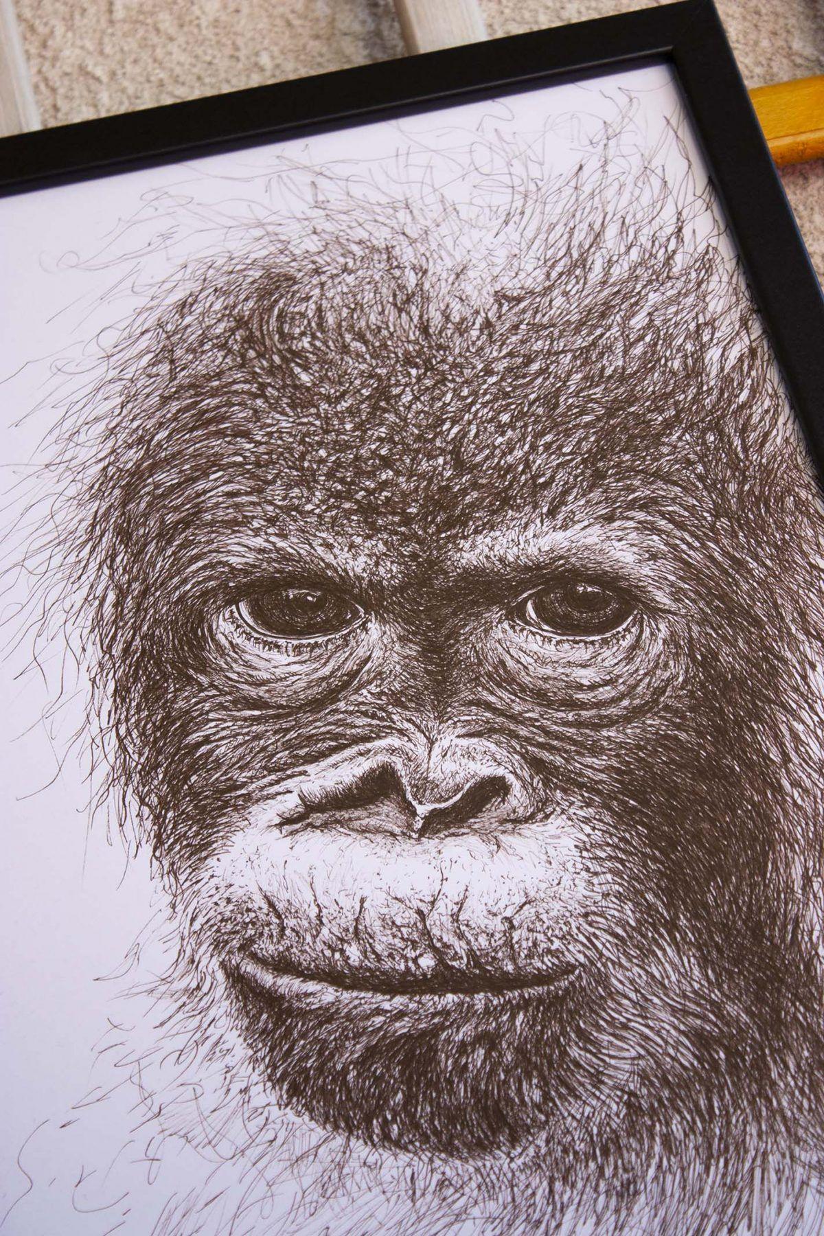 dibujo Orangután Bebé ilustracion-sirem wild