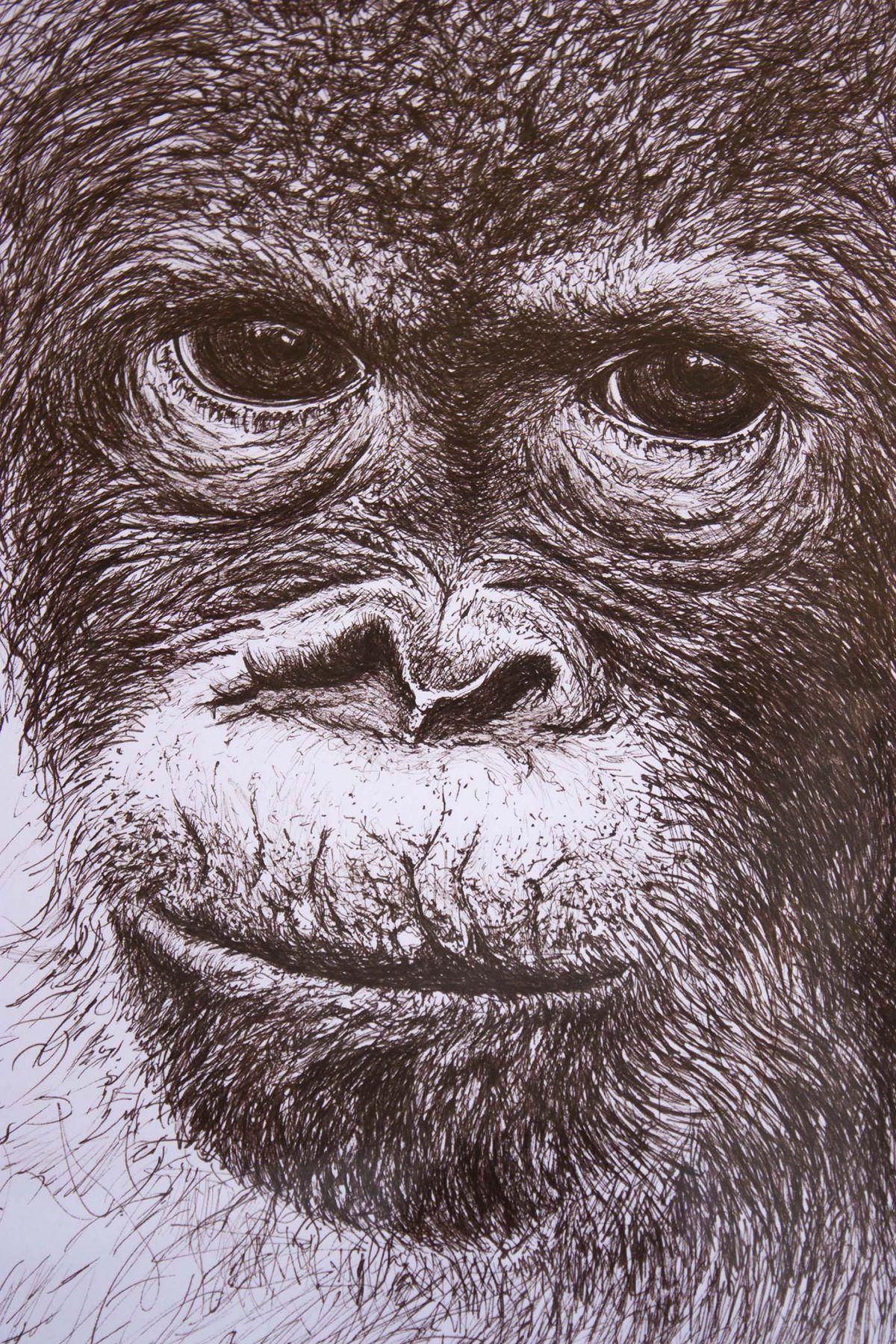 dibujo Orangután ilustracion boligrafo-sirem wild