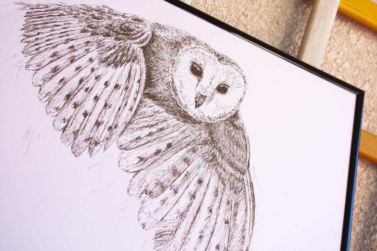 dibujo lechuza ilustracion-sirem wild