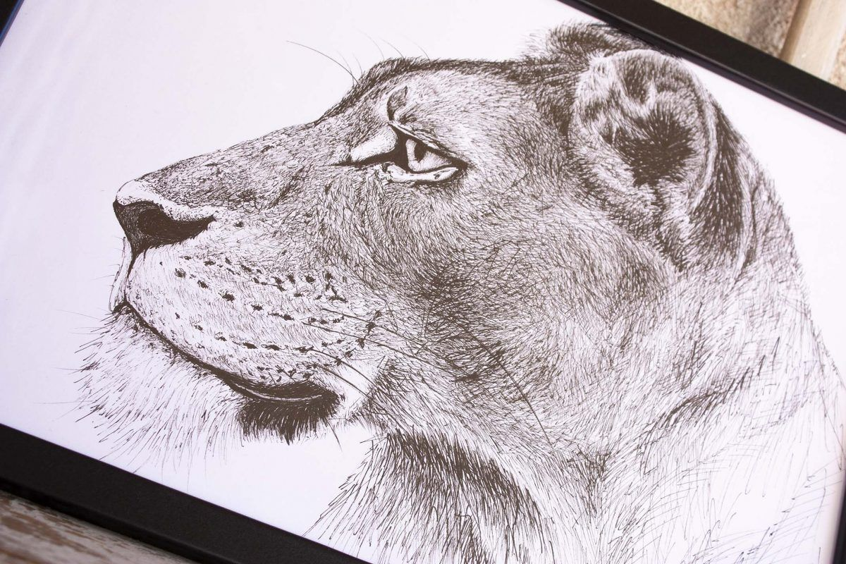 dibujo leona ilustracion-sirem wild