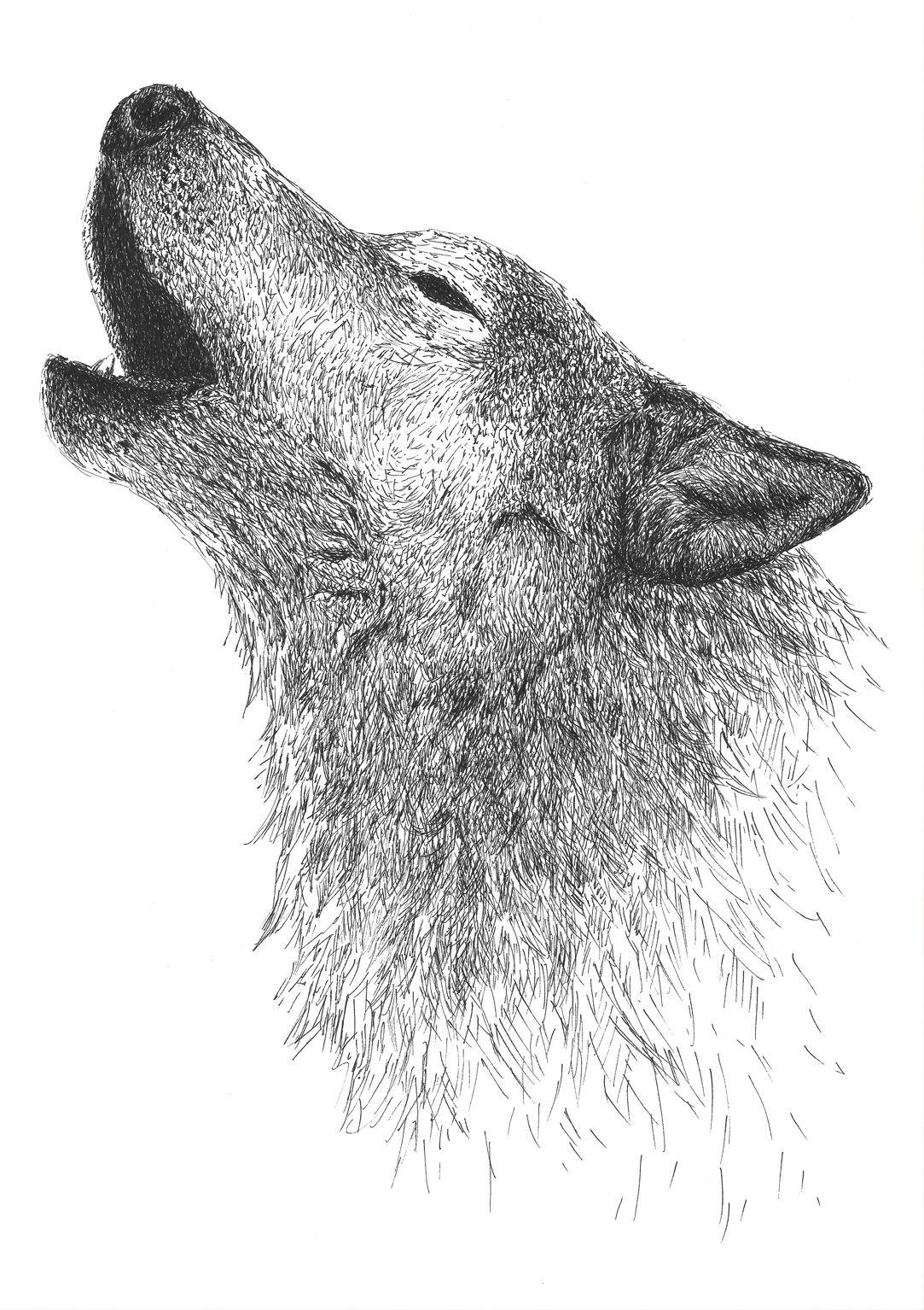dibujo lobo boligrafo-sirem wild
