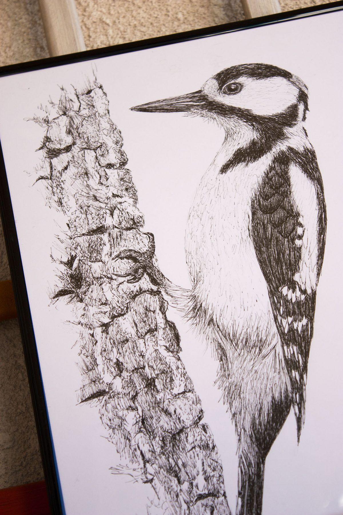 dibujo picapinos ilustracion-sirem wild