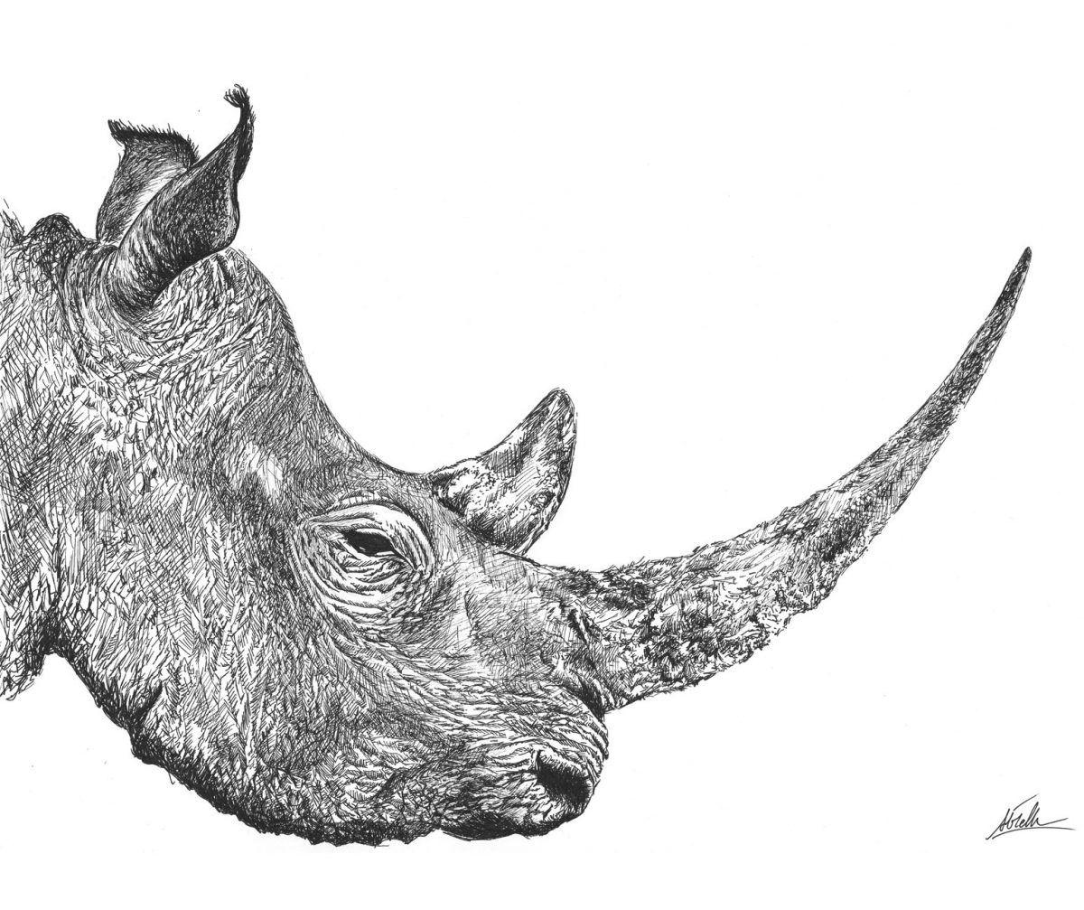 dibujo rinoceronte boligrafo-sirem wild