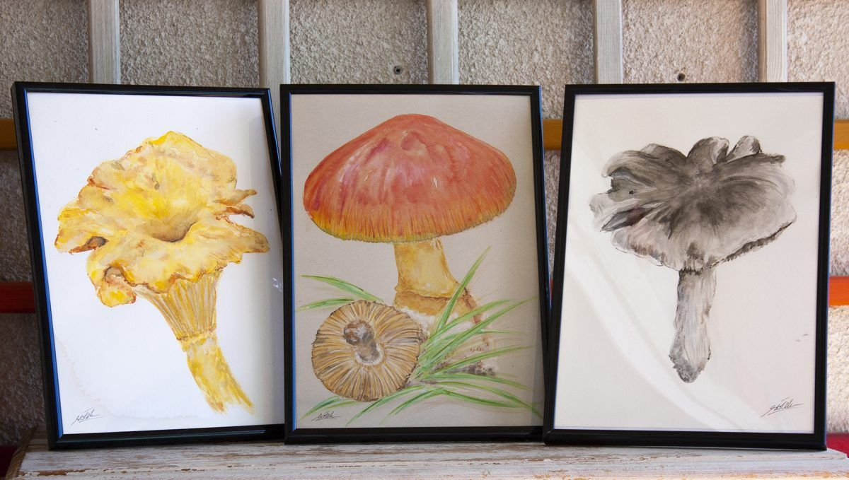 ilustracion setas amanita rebozuelo fredolic-sirem wild-acuarela